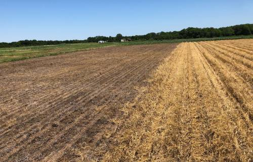 The study is funded by a grant through the Missouri Soybean Merchandising Council. It is a cover crop study with a focus on seeing if cover crops, with and without seed treatments, can lessen the amount of soybean cyst nematodes in the roots.