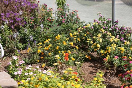 At the center of the pollinator education has been the native butterfly house. That showcase has been the first learning tool Director Amy Weeks has used to get individuals interested in the importance of pollinators.