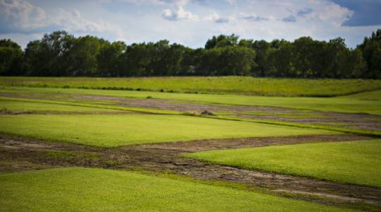 Research Center Magazine: Growing the GreenestGrass (click to read)