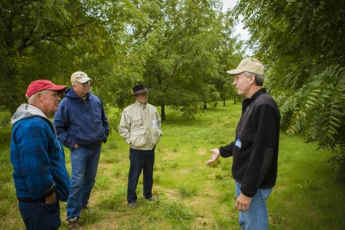 The Southwest Research Center is well-known for its specialty crop production. Thomas grows pecans, hickory nuts, chestnuts, persimmons and a variety of other plants, including elderberry.