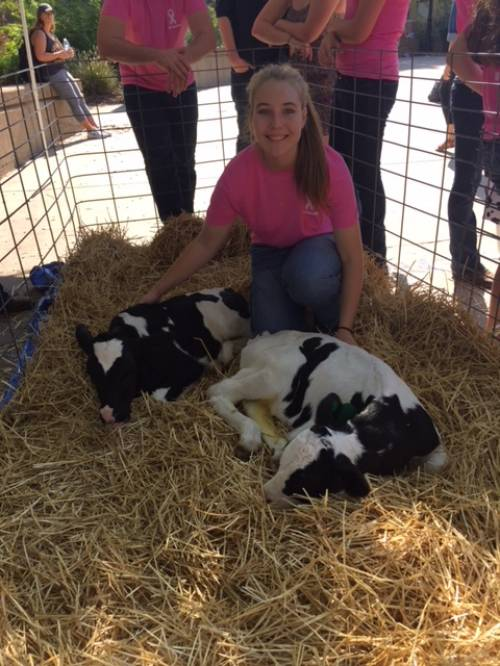 """Anna Tarpey wearing a """"Support Each Udder"""" t-shirt next to two calves at CAFNR Fall Round-Up."""
