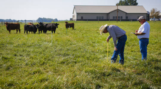 Impacting the Missouri BeefIndustry (click to read)