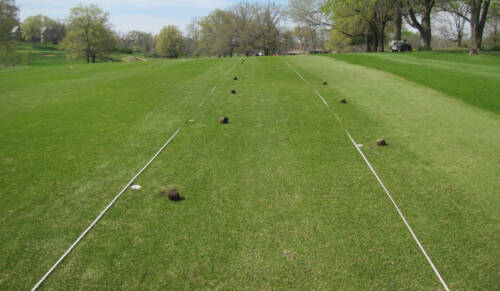 To capture and study the two species of billbugs on golf courses, Xiong developed a device that would catch the insect. Crafted out of PVC pipe and fitted with a filter, the devices were spaced out across a local golf course to collect the billbugs.