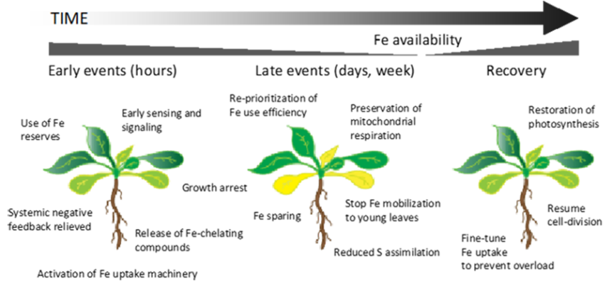 Figure 3 showing plant adaptation