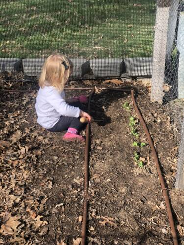 Stefanie's daughter, Lois, digging around freshly planted sugar snap peas. Photo courtesy of Stefanie Gray.