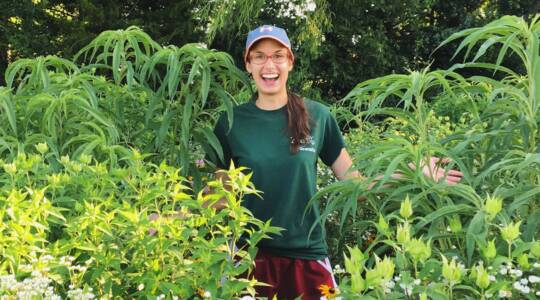 Katie LaPlante, Plant, Insect & Microbial Sciences (click to read)