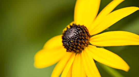 Native PlantSale (click to read)