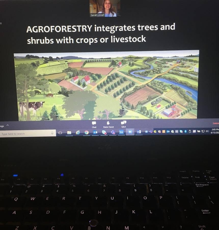 Lovell-agroforestry