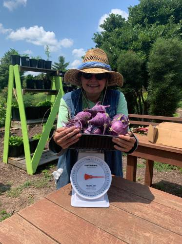 Maryfrances DiGirolamo with 12 pounds of kohlrabi harvested this past July.