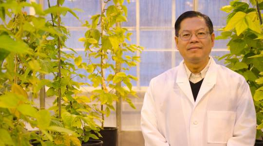 Henry Nguyen Named Editor of The PlantGenome (click to read)