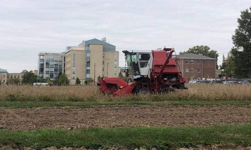 WheatHarvest-Sanborn