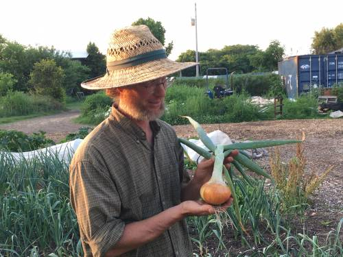 Curtis Millsap holding a yellow onion grown at his operation