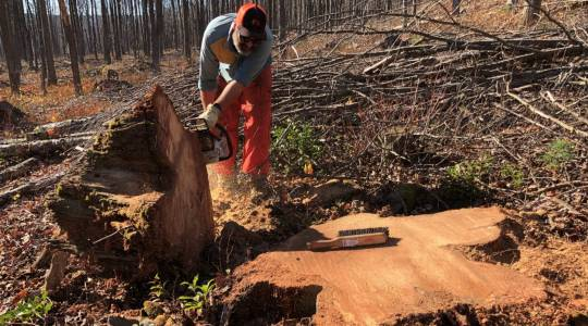 A Burning Passion for the Good Kind of ForestFire (click to read)