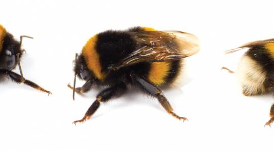 Loving Pure Honey and the Bees that Don't MakeIt (click to read)