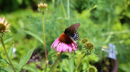 Science Night to Focus on Vegetables, Butterflies andFlowers (click to read)