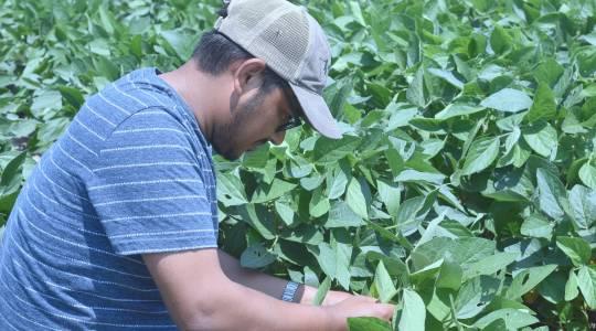 Pawan Basnet Receives Borlaug Scholarship and Diversity Enhancement Award throughNAPB (click to read)