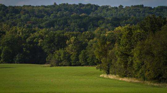 National Science Foundation Taps Danforth Center to Lead New Institute to Advance the Restoration of Natural and AgriculturalEcosystems (click to read)